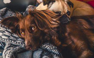 dierenverzekering afsluiten